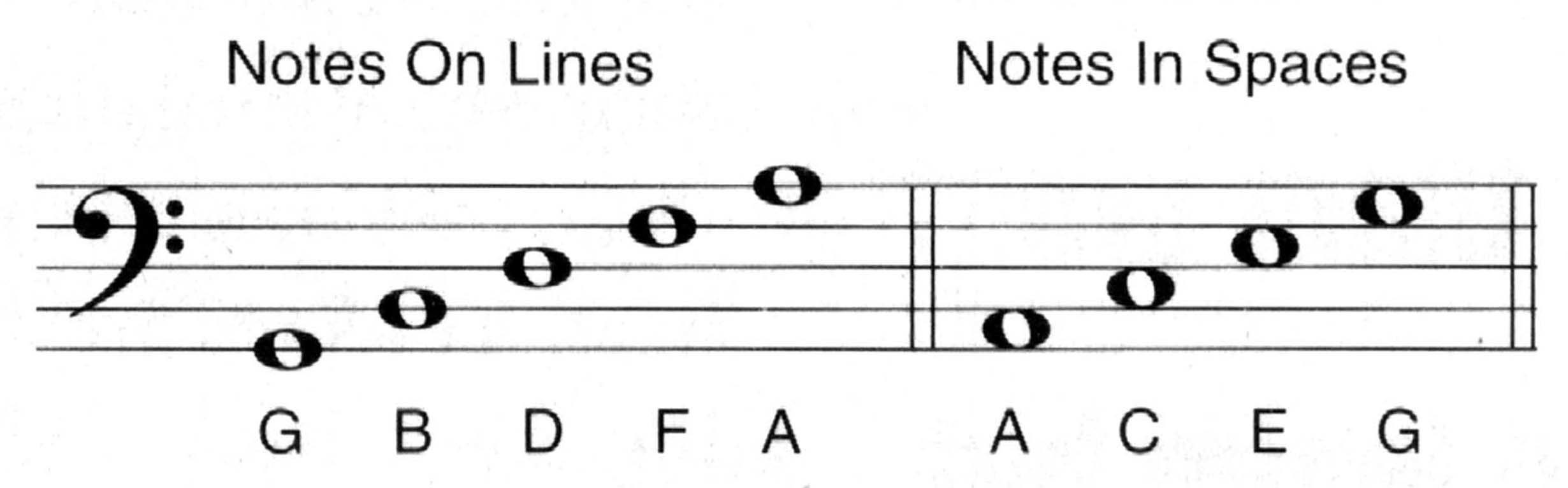 The Notes on The Bass Clef